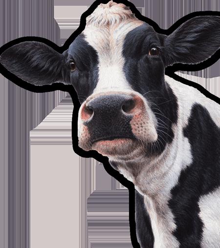 Alta Dena Dairy - Cow